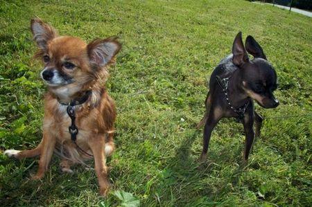 7 знаменитих порід собак, виведених в Росії