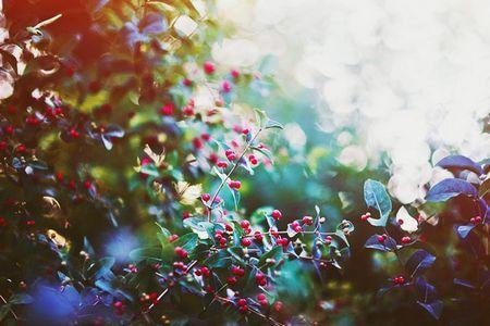 Витончена краса природи в фотографіях христини марченко