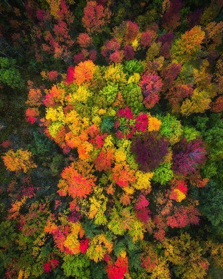 Michael matti проїхав всю північну америку щоб відобразити красу осені в різних штатах.