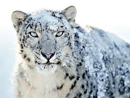 Не тільки люди люблять сніг!