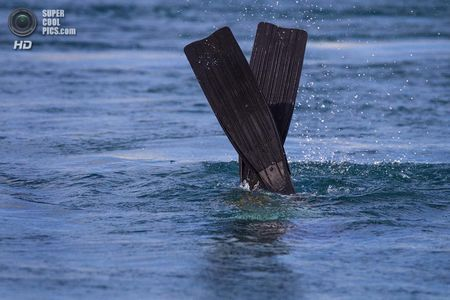 США. Форт-Пірс, Флорида. Біолог Дейв Кларк шукає черепах у впускному каналі. (Greg Lovett / The Palm Beach Post)