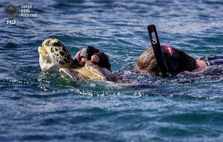 США. Форт-Пірс, Флорида. Дейв Кларк із зеленою черепахою, спійманої у впускному каналі. (Greg Lovett / The Palm Beach Post)